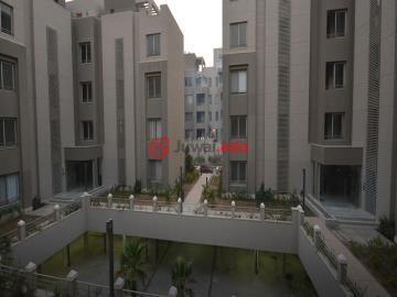 埃及的房产,编号36765093